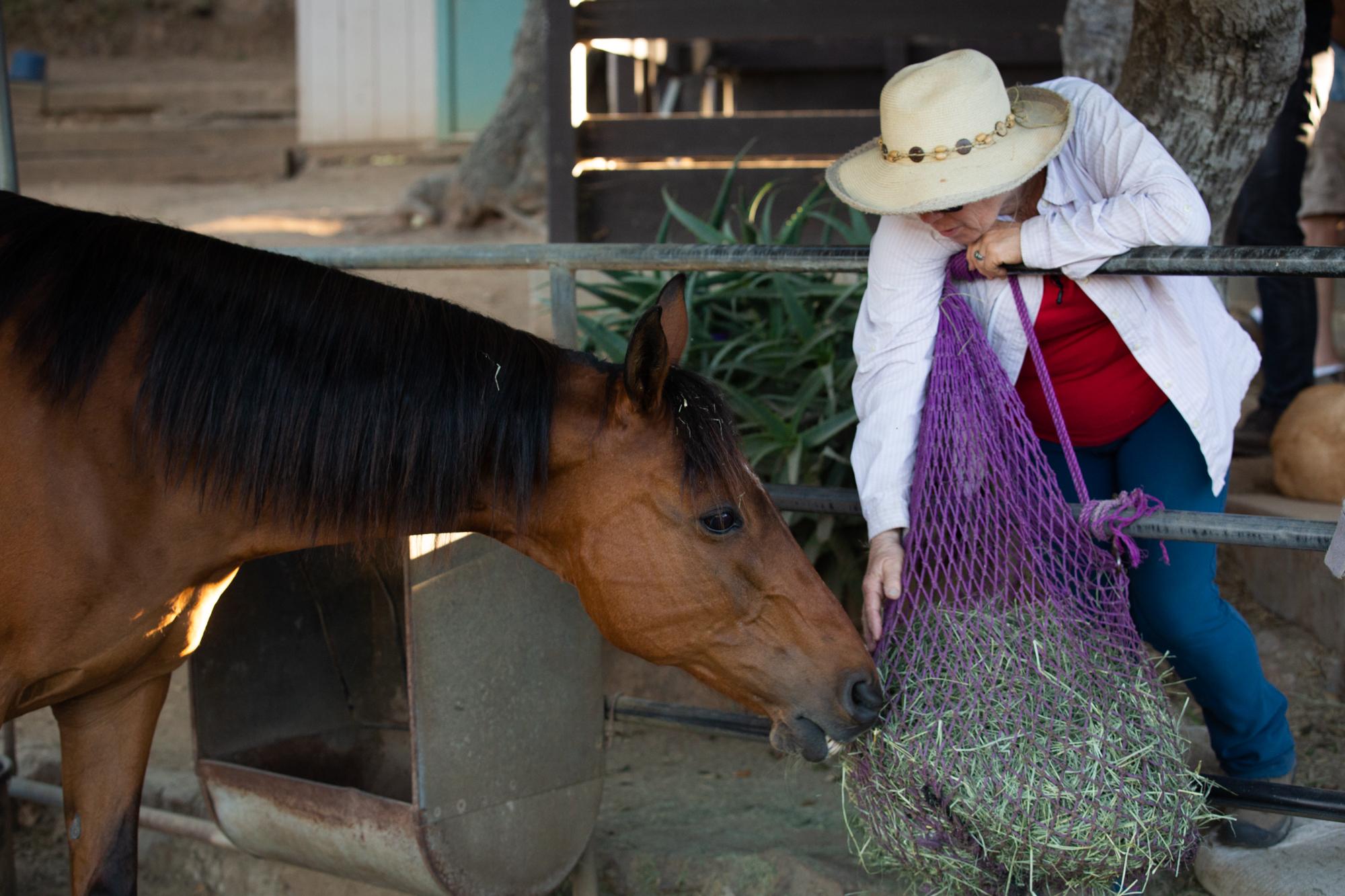 san-diego-wildfire-horse-2