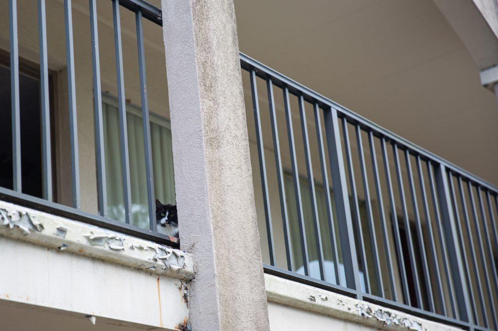 kinston-north-carolina-cats-2