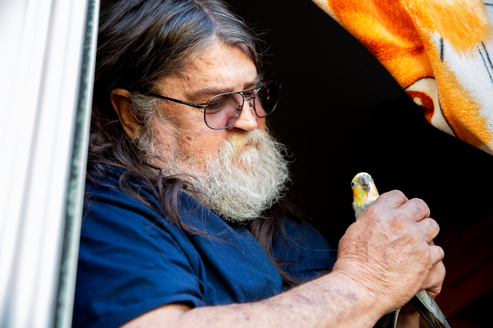 David Ramey - David Ramey, 65, lost his home of 30 years in Paradise, California, to the Camp Fire in 2018. He is living in a trailer in Chico, accompanied by his pet cockatiel, also named Chico because Ramey rescued him from a Chico parking lot 14 years ago. Ramey's son would like to return to Paradise, but Ramey says that he would be too stressed. (Allie Barton/News21)